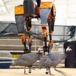 Найшвидший бігун у світі володіє штучним інтелектом