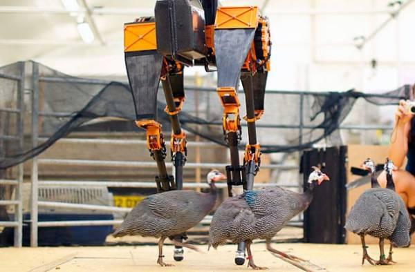 Найшвидший бігун-робот